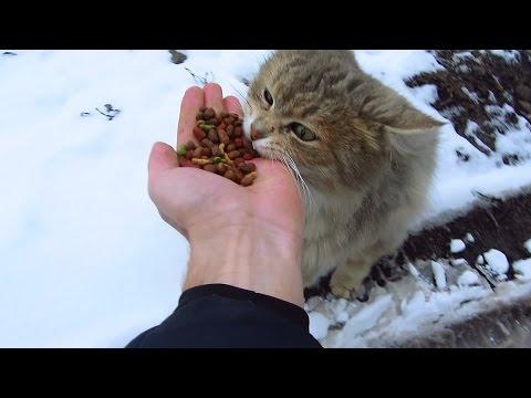 cat food for kittens