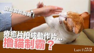 戰鬥擼貓!蛋捲的逆向擼貓制霸之路!【好味貓日常】EP9 thumbnail