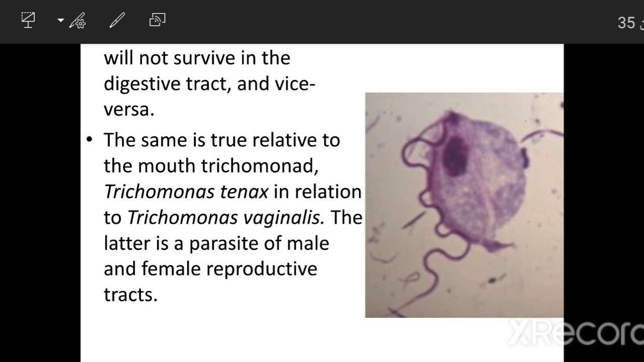 Trichomonas hatékony gyógyszer galandféreg flukes kezelés