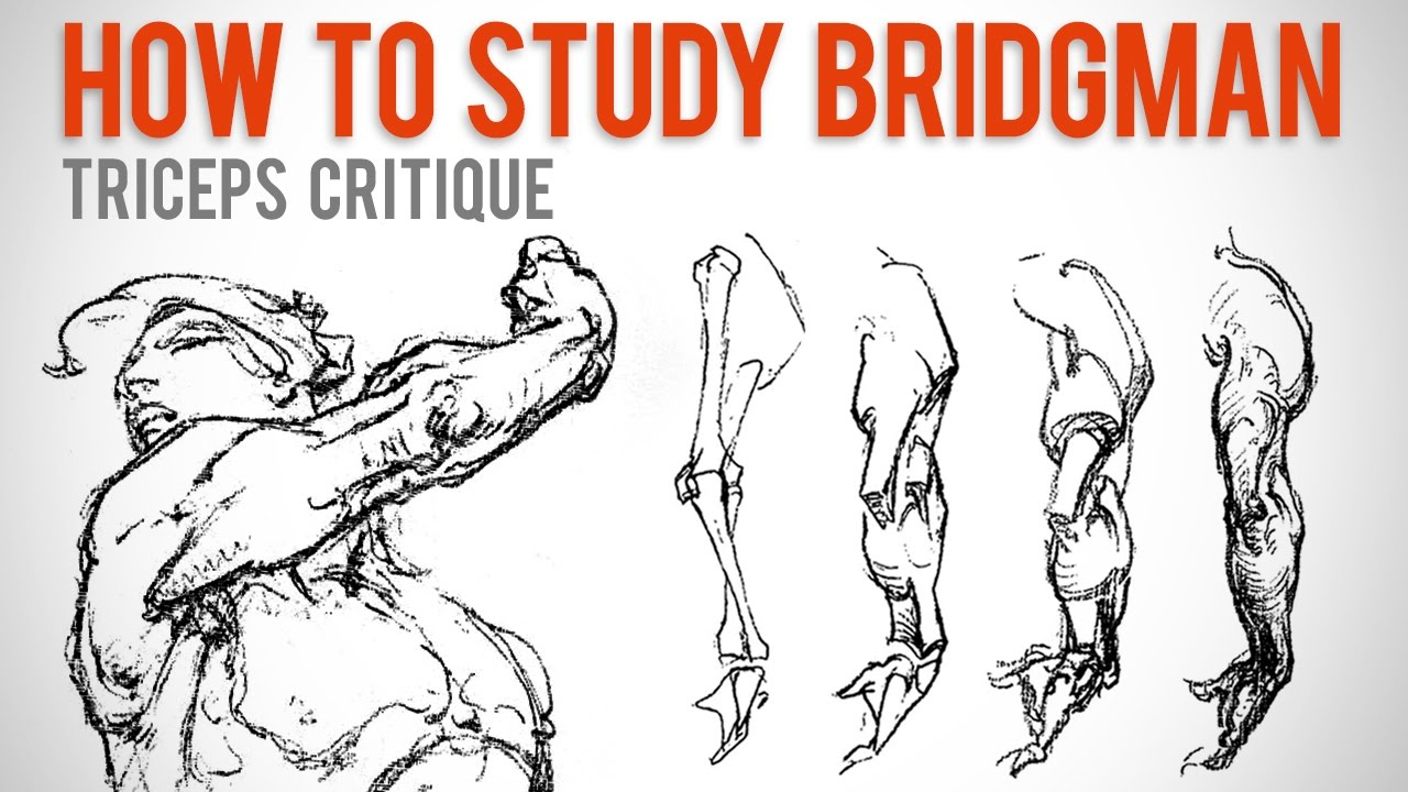 How To Study Bridgman Student Anatomy Critique Youtube