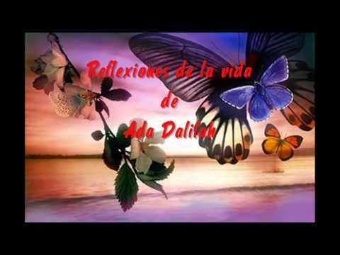 Una Reflexion La Mariposa Y La Flor Youtube
