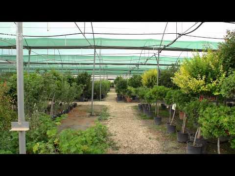 Paphos Garden Center