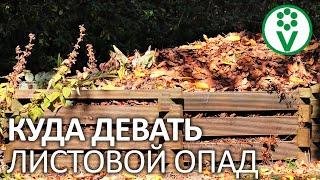 Чудесные свойства ЛИСТОВОГО ОПАДА для сада и огорода!