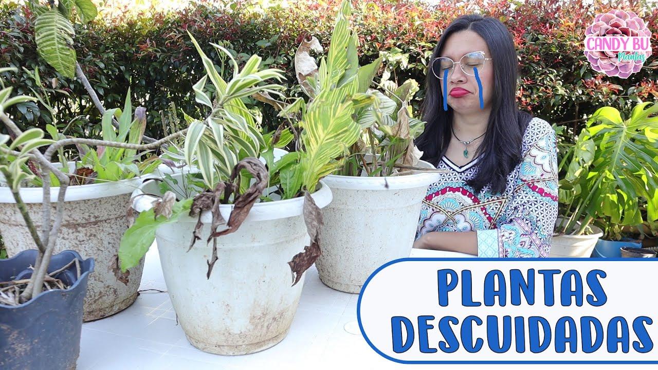Recuperando plantas que había descuidado│Candy Bu