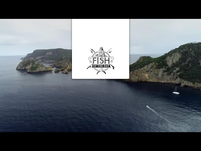 Fish of the Day Saison#2 Episode#7 - Une nouvelle visite des Poor Nights Islands en version 360 !