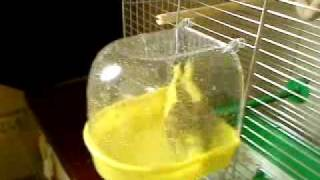 видео Любой | Птичка моя