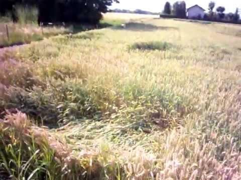 Crop Circle: Cerchi nel grano a Sulbiate