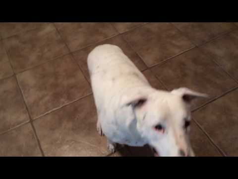 Crazy Rocky Funny Dog Trick Game Gone Wrong