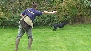 Gundog training: Teaching directions