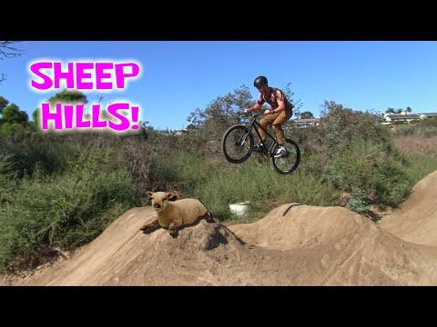 SHEEP HILLS SESSION