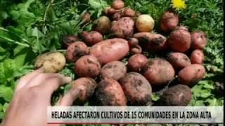 HELADAS AFECTARON CULTIVOS DE 15 COMUNIDADES EN LA ZONA ALTA