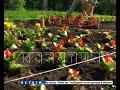 Нижний Новгород к юбилею зазеленеет - в городе сажают кустарники и цветы