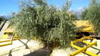 AFRON olive harvesting machine