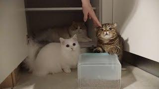 고양이를-키울-때-이상과-현실