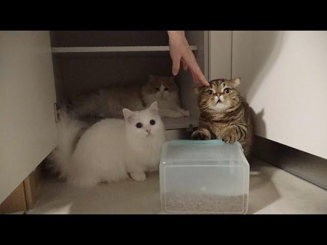 고양이를 키울 때 이상과 현실