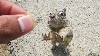 HOW TO TOUCH A SQUIRREL!
