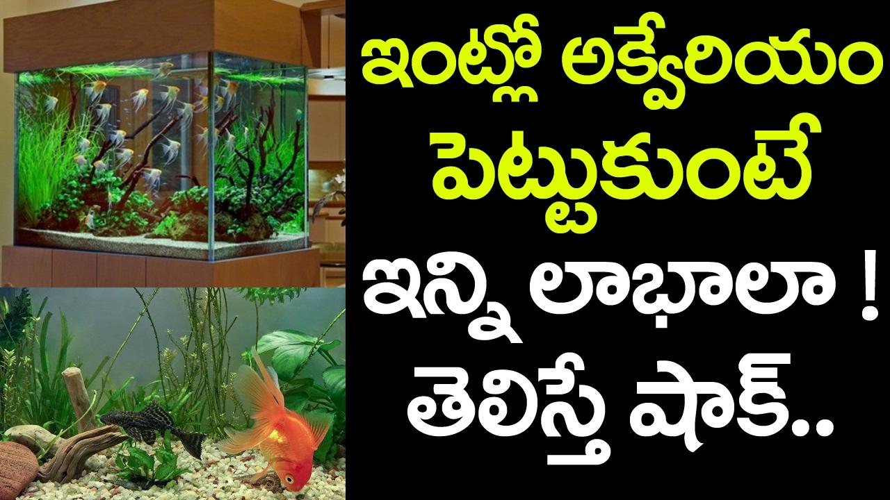 Fish aquarium in jayanagar - We Must Have A Fish Aquarium At Home And Office Best Tips In Telugu Vtube Telugu