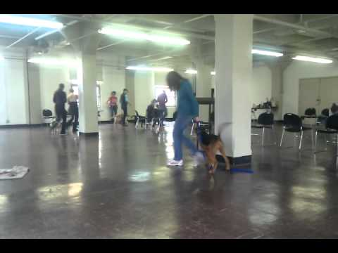 Musical chairs art Smarty Pup 201