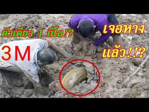 Dig for giant eels under deep mud
