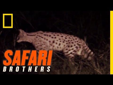 Night Safari Surprise | Safari Brothers