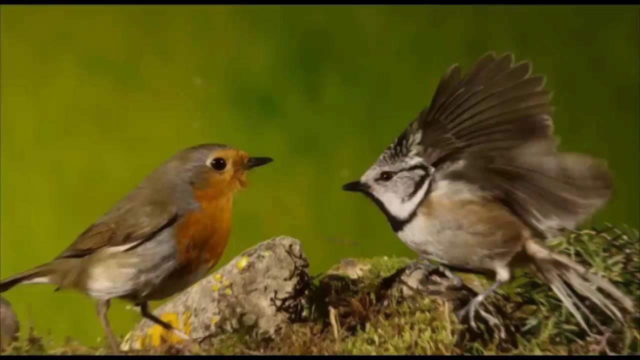 Presentación libro Fauna Vertebrada en el Paisaje Protegido - YouTube