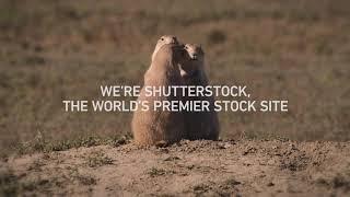 Shutterstock | Find True Love - now 10% off