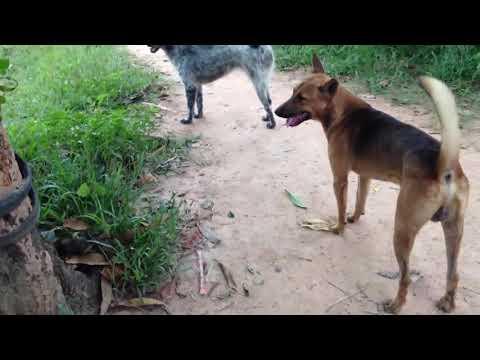Dog fighting !!
