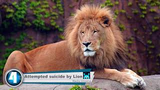 8 Zoo Fails