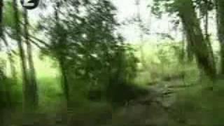 Extraño animal apareció en Río Negro -