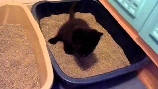 Котята в туалете.