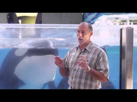 Behind The Truth Of Seaworld
