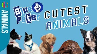 Blue Peter's Cutest Animals!