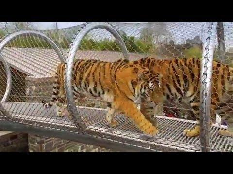 Zoo360