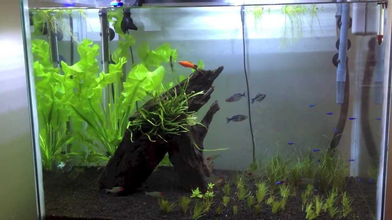 How to setup and maintain rena filstar xp3 canister for Aquarium rena