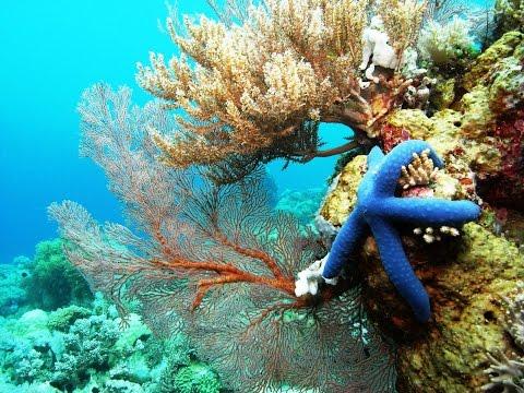 Southeast Sulawesi - Coral Reef Kingdom