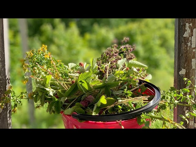 За травами и ягодами