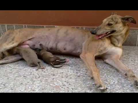 Petition · Stop the Export of Irish Greyhounds to Pakistan
