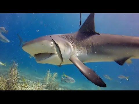 Dive trip to Bimini Island - Bahamas