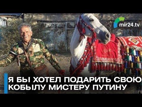 Сириец хочет подарить Путину скакуна!  Скачет уже пол года из Дамаска
