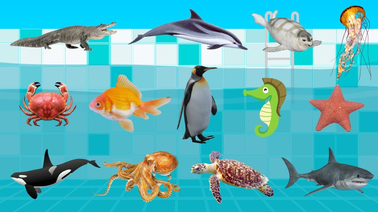 learn animals of the ocean kids learn animals sea name in