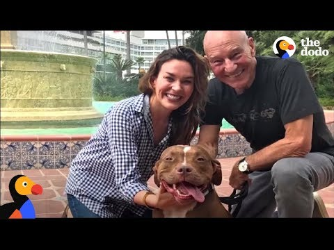 Patrick Stewart Forced to Give Up Pit Bull Dog Because Of BSL Ban   The Dodo