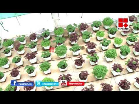 Green volunteer Vegetables│Reporter Live