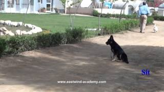 German Shepherd Companion Dog Course - Eastwind Training (in Egypt)