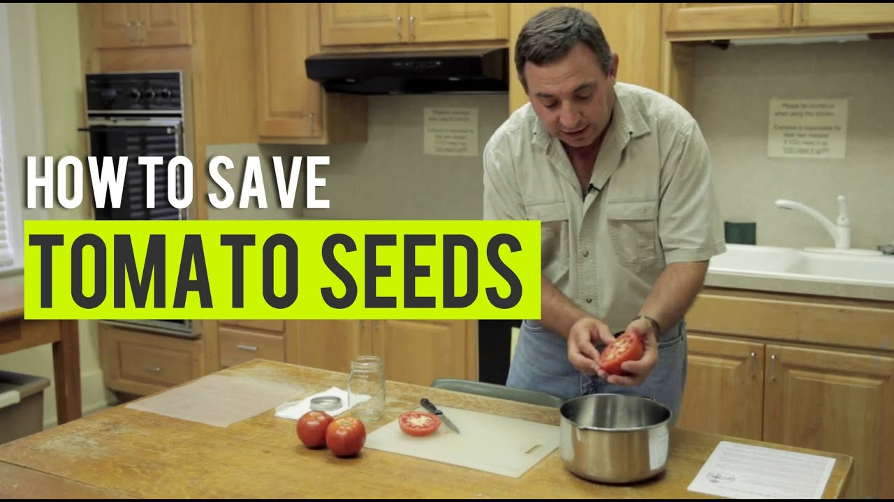 How Articles Gardening Web SeedsState Tomato To Save By 54jA3RL