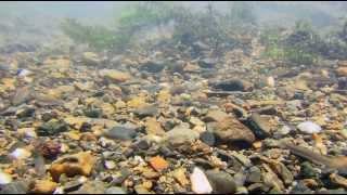 Satoyama II.  Japan secret water garden.   Cатояма: Таинственный водный сад Японии(Cатояма: Таинственный водный сад Японии Сатояма - это место с уникальной экосистемой, в которой люди и живо..., 2013-11-10T13:08:59.000Z)
