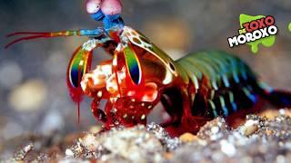 7 Criaturas que no Creerás que son Reales  Listas DeToxoMoroxo