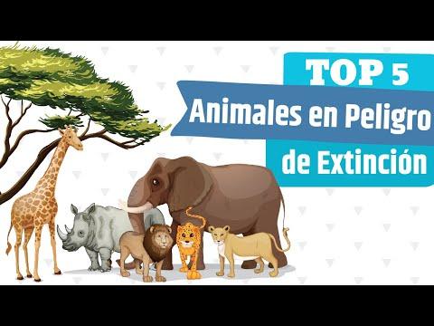 Top 5: Animales