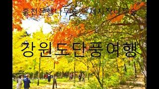 김홍은과 함게떠난 강원여행-홍천은행나무외