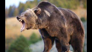 Охота на медведя с копьем видео
