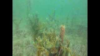 Underwater Coral Reef Farms